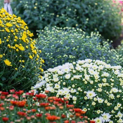 peraga garden center bulbi autunnali