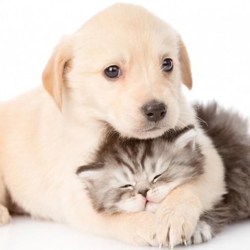 pet shop promo prodotti per animali