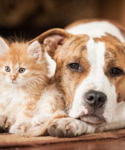 arcaplanet promo prodotti per animali